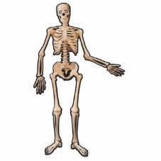 Halloween Jointed Skeleton Decoration